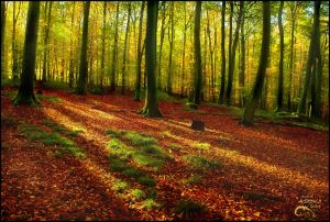 Autumn forest by AStoKo