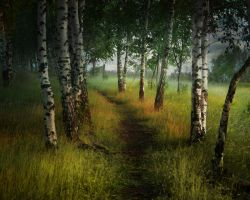 Birch trees by ElenaDudina