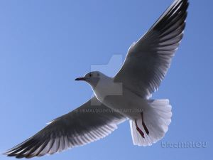 Close up Seagull800 by blueMALOU