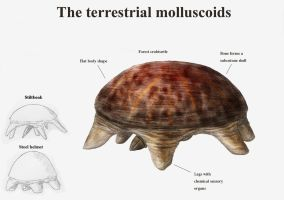 REP: The terr. molluscoids by Ramul