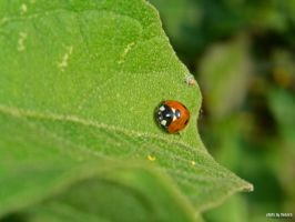 Lady Bug by renoiro