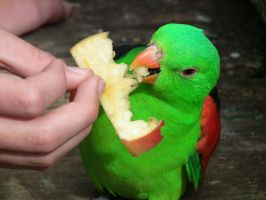 Parrot's Lunchtime by BrendanR85