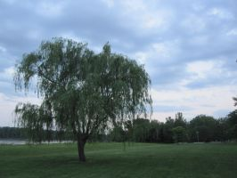 Weeping Willow by r-a-i-n-y