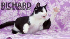 Richard Application Photo HD 1920 and Video by hoschie