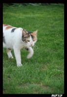 CAT_8 by mufash