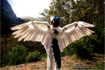 My Shiron Pic done by Cy by benzene66