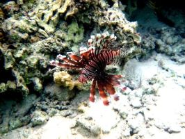 Lion Fish Marianas Trench by spidermonkeykiss