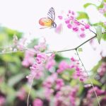 A sunny day to dance in the air by simplysuzu
