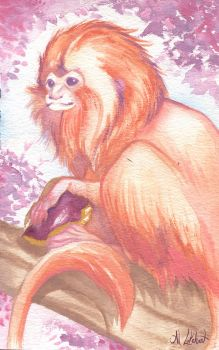 Golden Lion Tamarin by justjingles