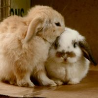 You smell nice by poppies-for-you