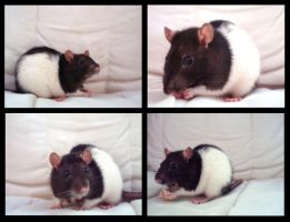 Rats by lune-lovely
