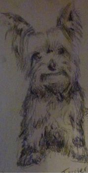 Yorkshire Terrier by neriiware