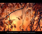 The autumn is now by wchild