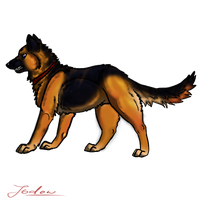 German Shepherd by Jodow