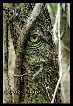 Eye of the Forest by WickedNox