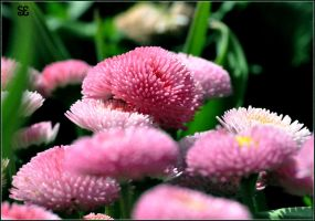 Flowers Of Floriade: 10 by sazze