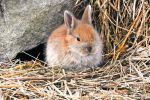 Baby Rabbit1 by brijome