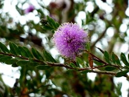 Purple Puffball by AtomicBrownie