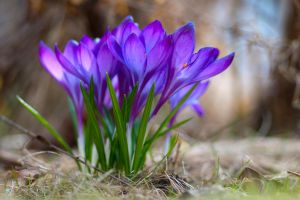 Spring, Finally Here by sudd