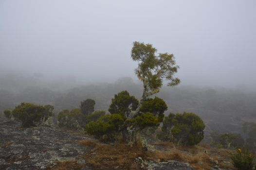 Foggy forest of Maido Peak to 2 190 meters by A1Z2E3R
