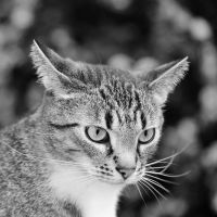 just a cat VI by Wilithin