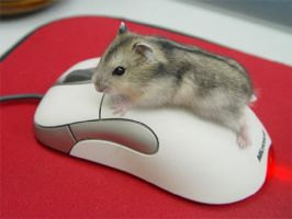 Hammie on Mouse by roborovskii