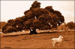 The Tree And The Lamb by Estruda