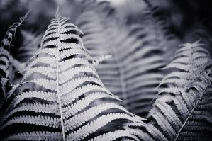Fern by Freggoboy