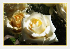 Butter Cream Roses by Casperium