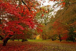 Autumn in the Park by parallel-pam