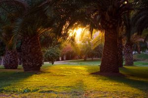 Among the Palms by ThomasJergel