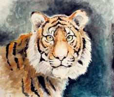 Watercolor Tiger by Spilled-Sunlight