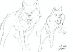 Wolf sketch. 1 by MortenEng21