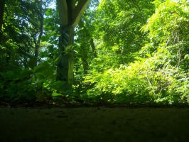 From The Forest Floor by sadistik-stock