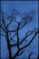 Tree on blue by Kurios32