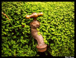 Garden Tap by niallabrown