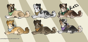 Dog adopts - closed - by PointAdoptsforyou