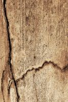 Cracked Texture 01... by the-night-bird