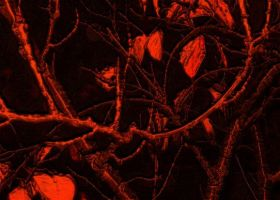 Red Vein Tree Plague by Viper-mod