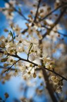 Welcome Springtime by hafele