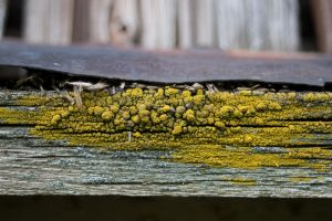 Fungus on wood by tpenttil