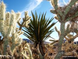 Buckthorn Cholla, Mohave Yucca, and a Nest by ClymberPaddler