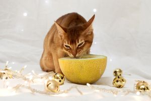 Festive Kitten Stock Outake 3 by FurLined