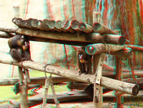 Ft Worth Zoo Baboon - Anaglyph by 3dBruce