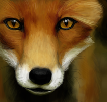 Mr. fox by N-B-R-artwork