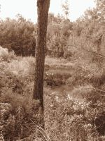 Sepia SWamp by lamelobo