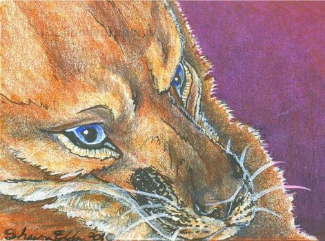 Fox ACEO by SpottedPegasus