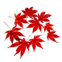 red leafs by augenweide