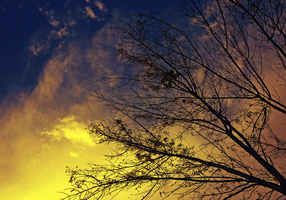 Branches against the sky by DMoralize