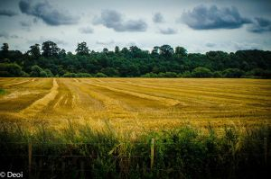 Golden Fields by DeoIron